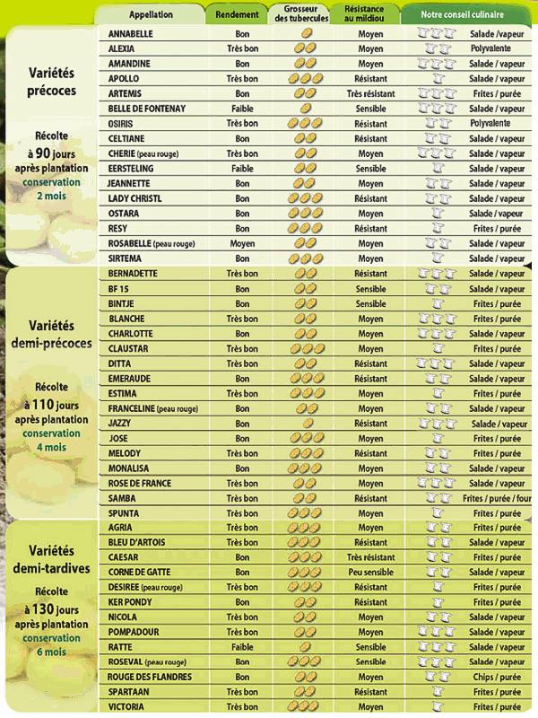 Pomme de terre - Tableau pomme de terre varietes ...